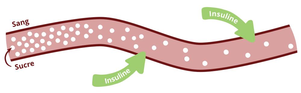 47893336c6ad34 Plus l'aliment a un index glycémique élevé, plus il fait monter rapidement  le taux de sucre dans le sang, et plus notre organisme doit sécréter  d'insuline.